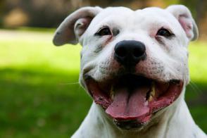 Rechter gelooft niet dat hond te hard reed