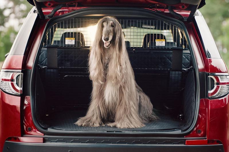 Land Rover Pet Packs honden dieren achterbak