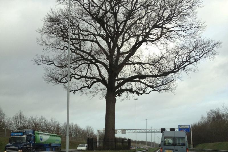 Blijf van mijn boom